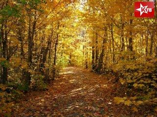 картинки осенний лес